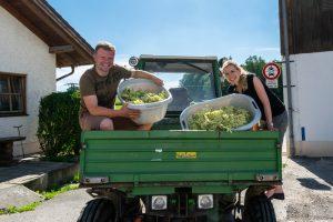 Korbinian und Barbara Kugler bei der Holunderblüten Ernte
