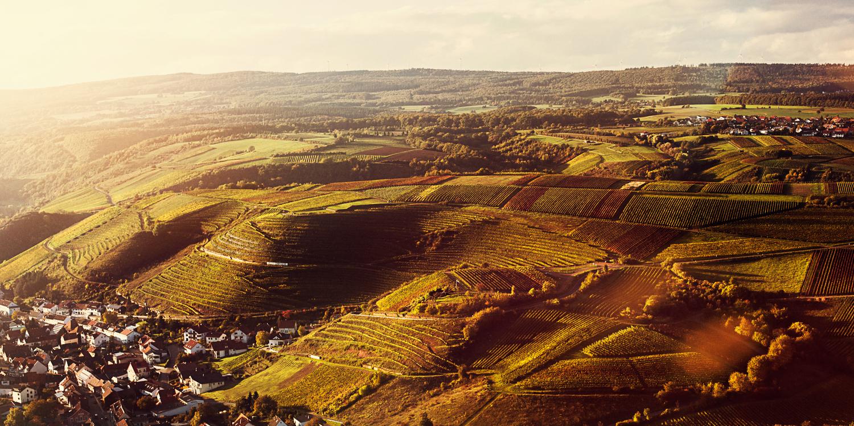 Auch in den Weinbergen Johannisberg wachsen die Trauben für die Weine und den alkoholfreien Secco vom Weingut Schott