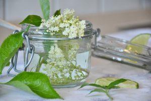 Holunderblüten als Grundlage für den selbstgemachten Holundersirup der Kugler Alm in Ebersberg